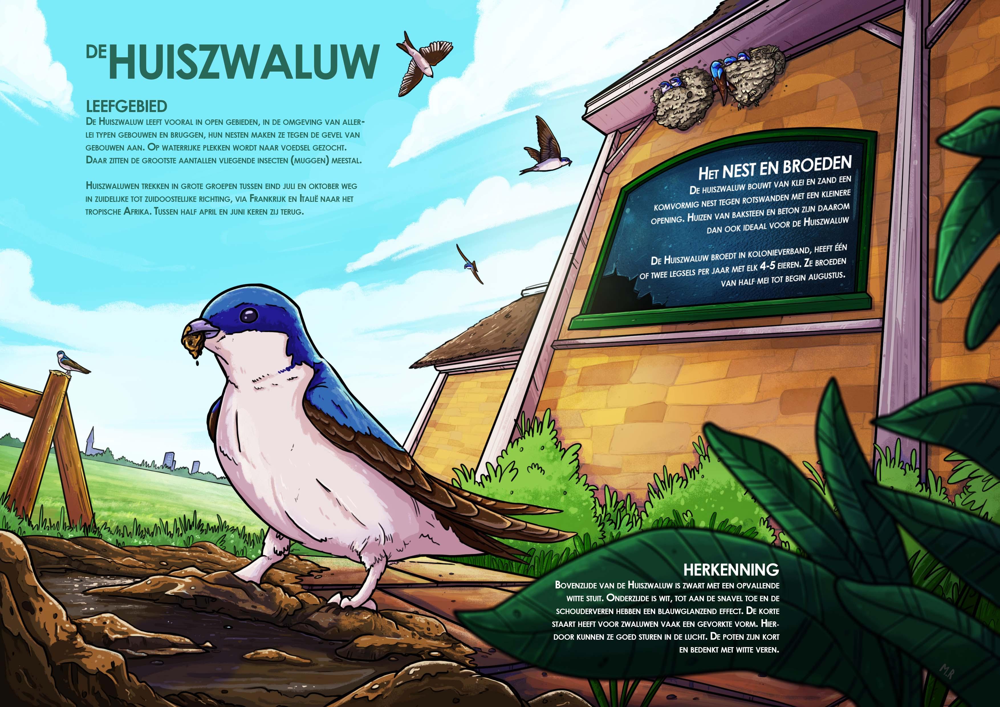 Infographic_Huiszwaluw4_web