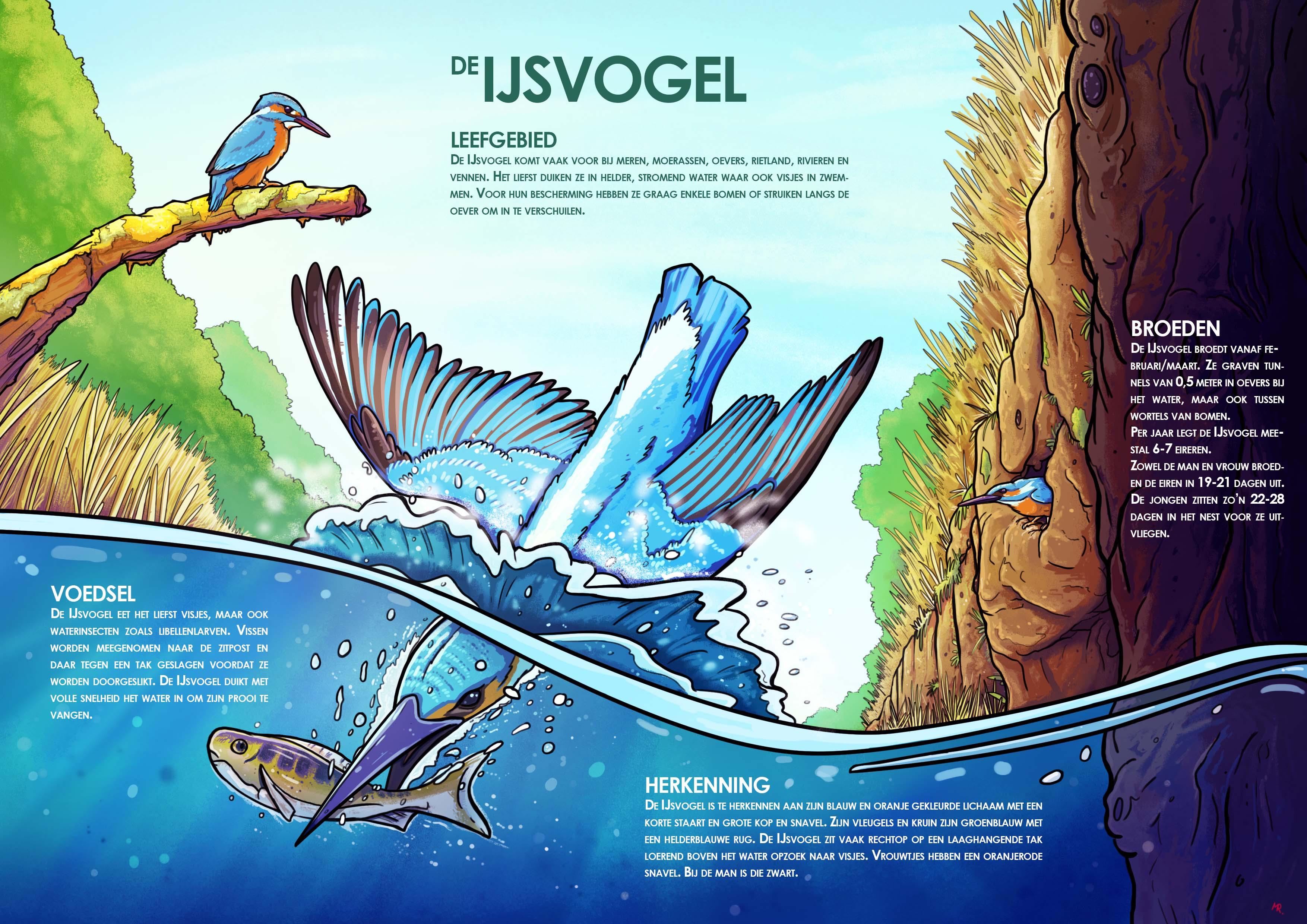 Infographic_IJsvogel_Recoverd_Web
